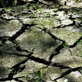 Steve Taylor - Cracked Earth