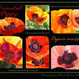 Brooks Garten Hauschild - Poppy Love