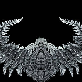 David Kehrli - Creature in the Mirror