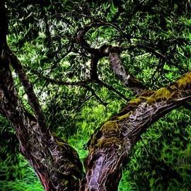 Jon Volden - Creepy Tree