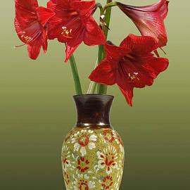 Schwartz - Crimson Amaryllis in Tall Vase