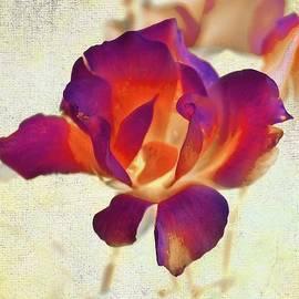 Rene Crystal - Crimson Rose
