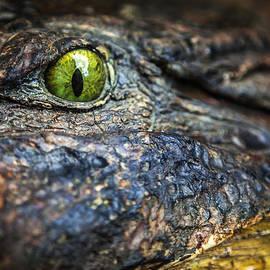 Karen Wiles - Crocodile