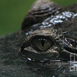 Gary Gingrich Galleries - Croc