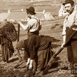 The Keasbury-Gordon Photograph Archive - Crofters digging peat Scotland