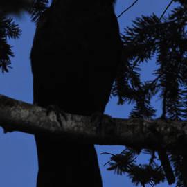 Bryan Hanson - Crow - Raven