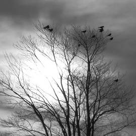 Christine StPierre - Crows At Sunset