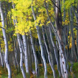 Allen Beatty - Crested Butte Aspen Grove