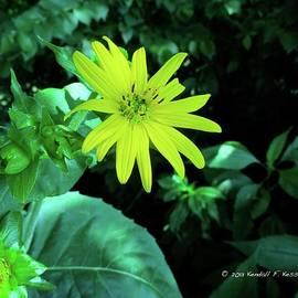Kendall Kessler - Cup Plant Beauty
