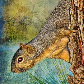 Mariola Bitner - Curious Squirrel