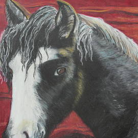 Jeanne Fischer - Curly - The Nokota Mustang