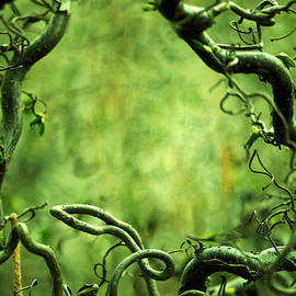 Jaroslaw Blaminsky - Curly tree branches