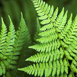 Christina Rollo - Curved Fern Leaf