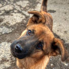 Vlad Baciu - Cute dog closeup