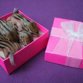 Photo Lanico - Cute Gift
