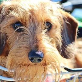 Cynthia Guinn - Cute Puppy