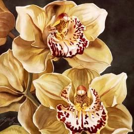 Alfred Ng - Cymbidium orchids
