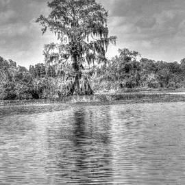 Myrna Bradshaw - Cypress Reflection