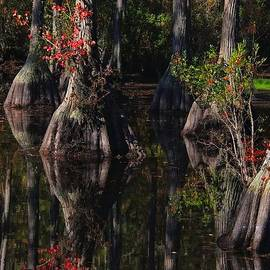 Laura Ragland - Cypress Reflections