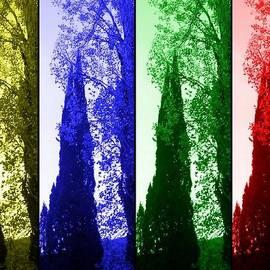 Rick Todaro - Cypress