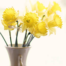 Sylvia Cook - Daffodil bouquet