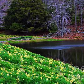 Linda Troski - Daffodils by the Lake