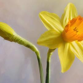 Hal Halli - Daffodils