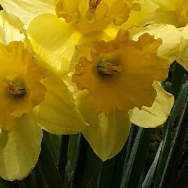 Richard Andrews - Daffodils