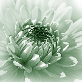 Jennie Marie Schell - Dahlia Flower Soft Green