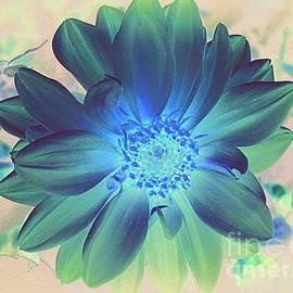 Photographic Art and Design by Dora Sofia Caputo - Dahlia in Midnight Blue - Pop Art