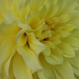 Christiane Schulze Art And Photography - Dahlia Macro