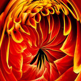 Jean Noren - Dahlia on Fire