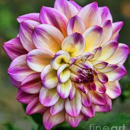 Shirley Mangini - Pink and Yellow