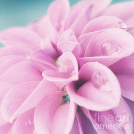LHJB Photography - Dahlia with raindrops