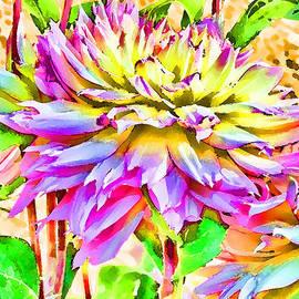 Sandra Foster - Dahlias In Digital Watercolor
