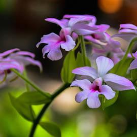 Kathy Liebrum Bailey - Dainty Orchid