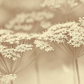 Jennie Marie Schell - Dainty White Flowers Soft Brown