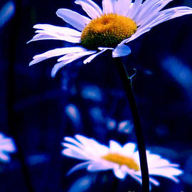 Rory Sagner - Daisies In The Blue Realm