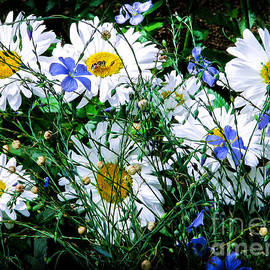 Roselynne Broussard - Daisies With Blue Flax And Bee