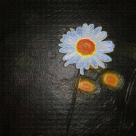 Tom Janca - Daisy And Dandelions
