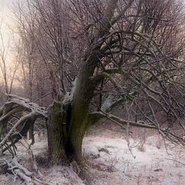 Jim Vance - Damaged Tree