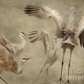 Pam  Holdsworth - Dance of the Sandhill Crane