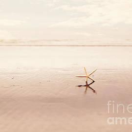 Sylvia Cook - Dancing starfish beach photograph