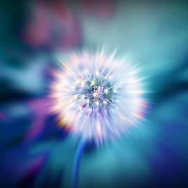 Lilia D - Dandelion Glow