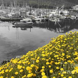 Cynthia Lagoudakis - Dandelion Harbor
