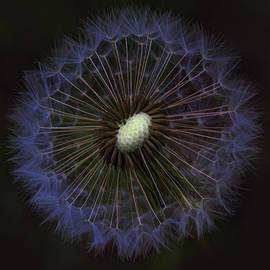 Kathy Clark - Dandelion Nebula