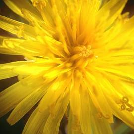 "Jessica Frech - #dandelion Says ""good Day"