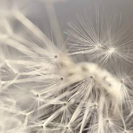 Jennie Marie Schell - Dandelion Weed Soft Gray Brown