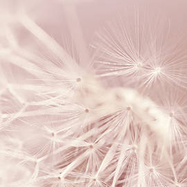 Jennie Marie Schell - Dandelion Weed Soft Pink