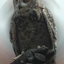 Colette V Hera  Guggenheim  - Danish Forest Owl living in Denmark